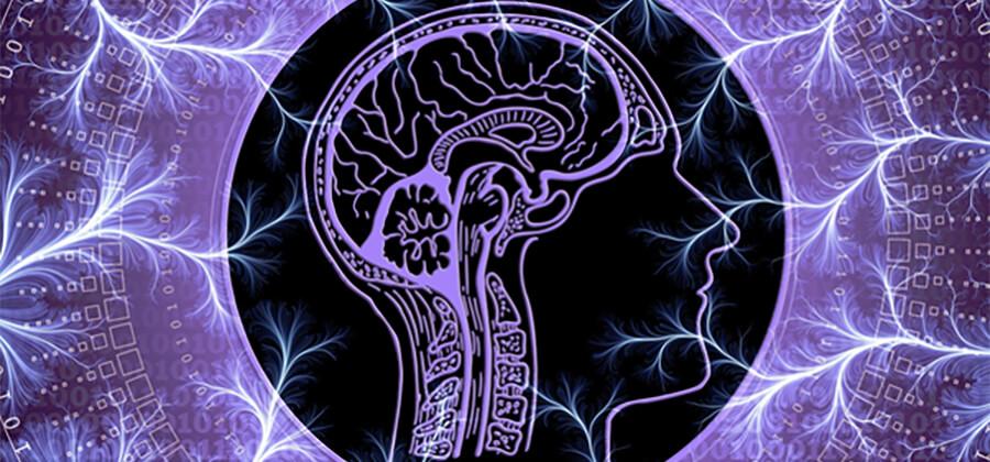 Purple head with brain.
